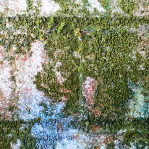 Usuwanie zabrudzeń organicznych- mchy i glony